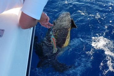 Sea Turtle saved by Salti and Crew